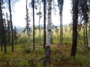 Fairbanks_ATV_Tour_062304_1269