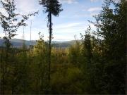 Fairbanks_ATV_Tour_062506_1273