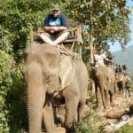 laos-luang-prabang-elefanten-0012
